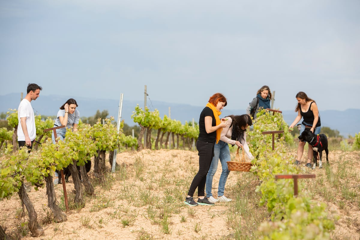 Camins farcits de vinya
